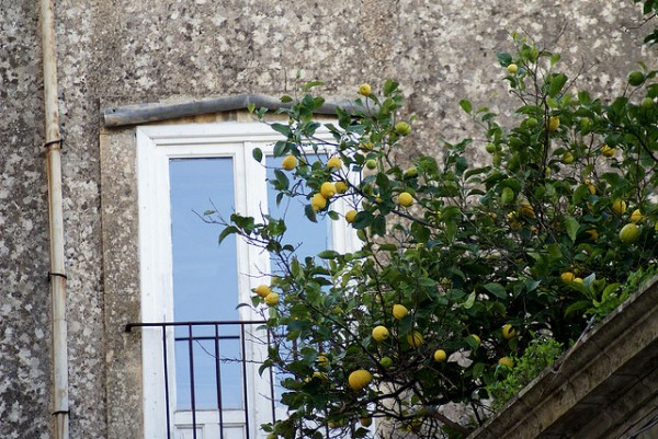 Lemons in Ibla Gardens, ©giopuo/Flickr